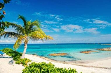 Palm tree, blue sea, sky in Great Stirrup Cay, Bahamas