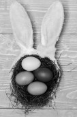 colorful eggs inside nest and rabbit ears. Happy Easter concept