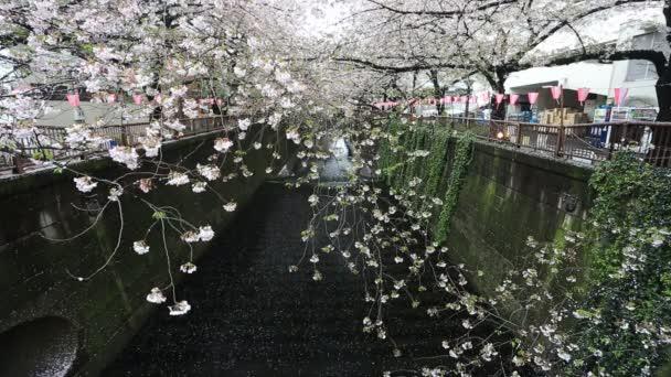 Sakura. Třešňový květ na Meguro Canal v Tokiu, Japonsko
