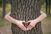 Fotografia Mani a forma di un cuore su un albero
