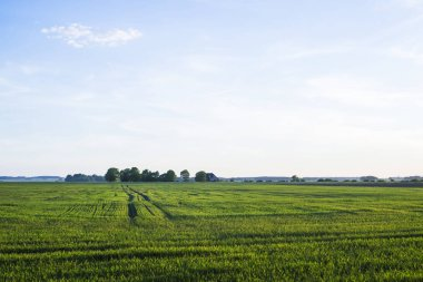 A view of the green country agricultural field on a sunny summer day, Latvia