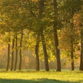 scenic view of trees in autumn forest