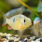 Fotografie Detailní pohled tropických ryb v akváriu