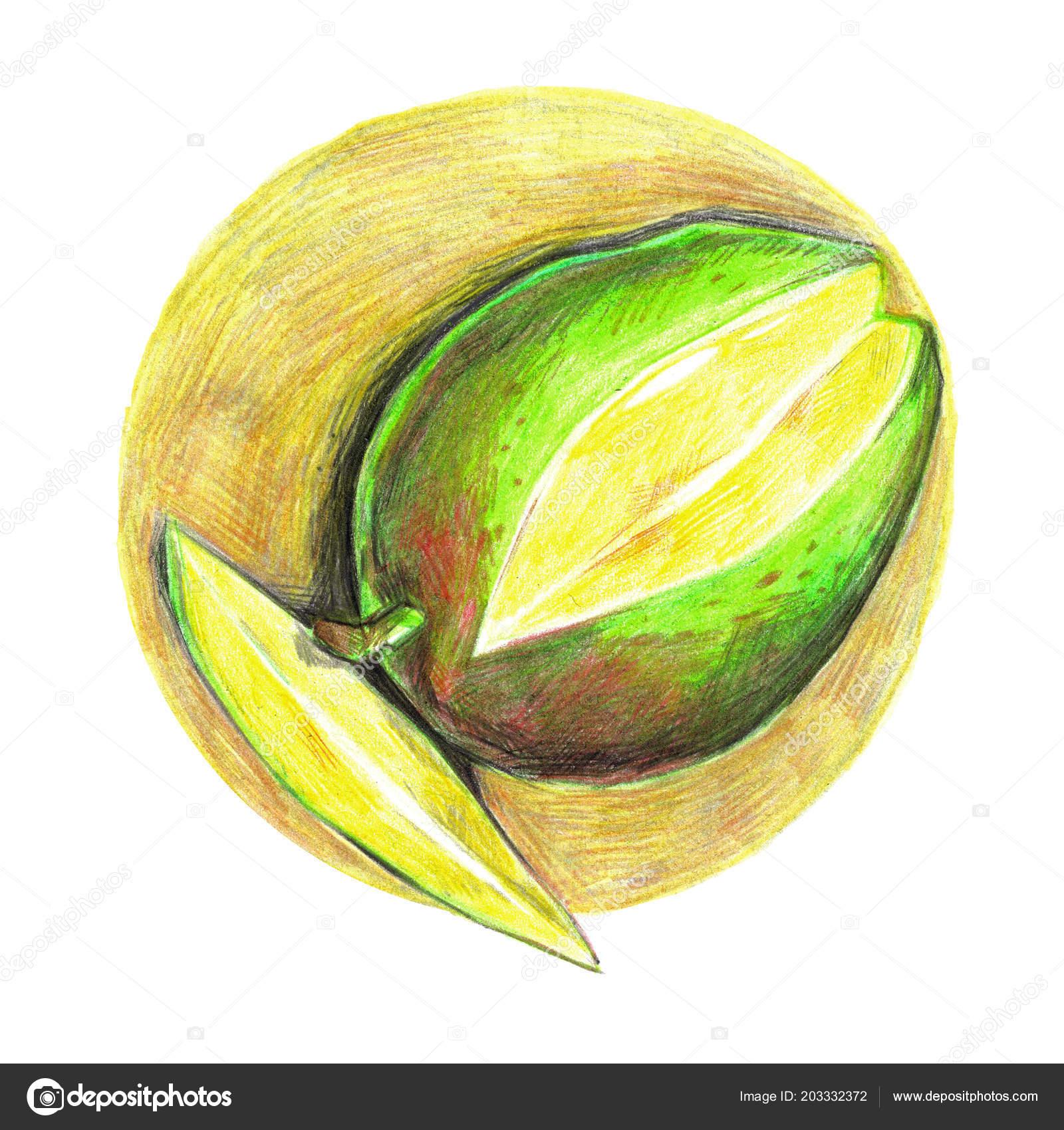 Mango Drawn Hand Traditional Art Color Pencil Drawing Beautiful ...