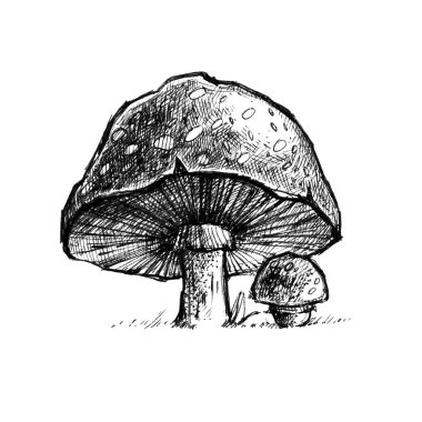 Hand drawn illustration with mushrooms. Engraving graphic style.