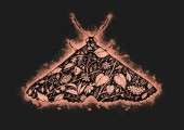 Fotografie Graphic illustration with flaming butterfly and flowers. Abstract nature drawing. Can be printed on a t-shirt, postcards, tattoo, books images, etc.