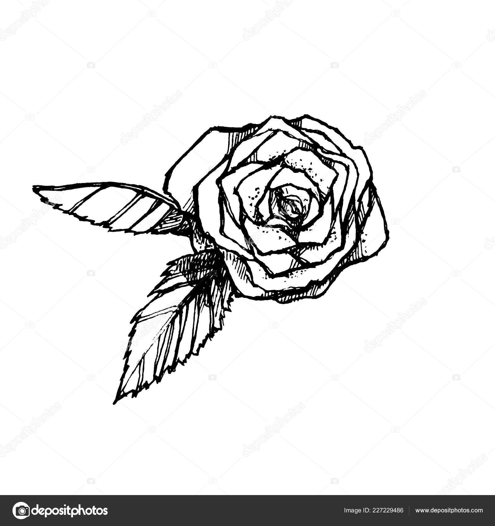 Disegnato Mano Bianco Nero Rosa Isolato Sfondo Bianco Elemento