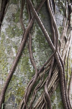 close up view of roots on tree in forest