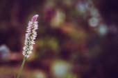 Fotografie Close-up grass flowers, blurry background
