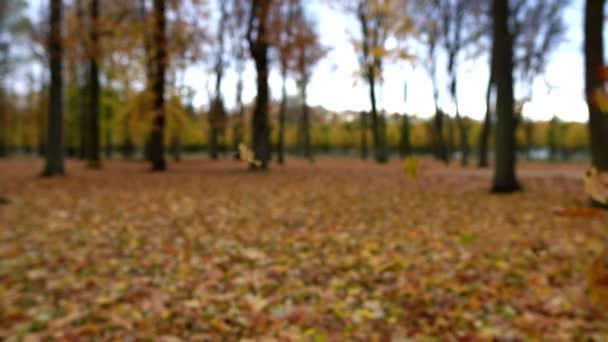 Zuhanó levelek az őszi erdőben, Lassú mozgás