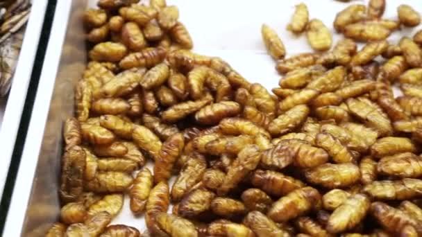 thailand insekten