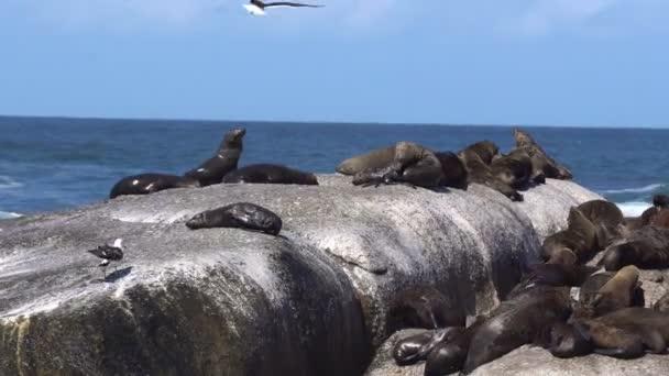 Pečeť ostrov sledovat výlet lodí v Jižní Afrika cestování