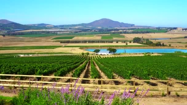 Jižní Afrika vinice vinařství farma obchodní krajina