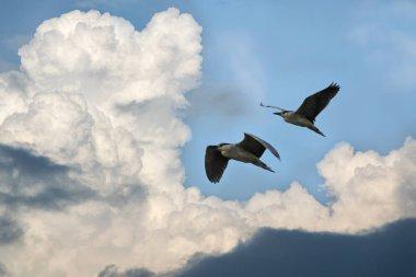 """Картина, постер, плакат, фотообои """"три птицы и разноцветное небо """", артикул 308192904"""