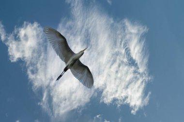 """Картина, постер, плакат, фотообои """"три птицы и разноцветное небо """", артикул 308192986"""