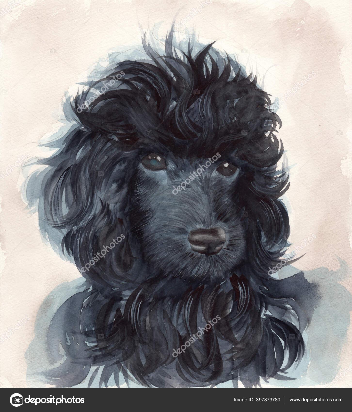 Potret Warna Air Dari Anjing Pudel Hitam Dengan Mantel Keriting Stok Foto C Kkkisssa 397873780