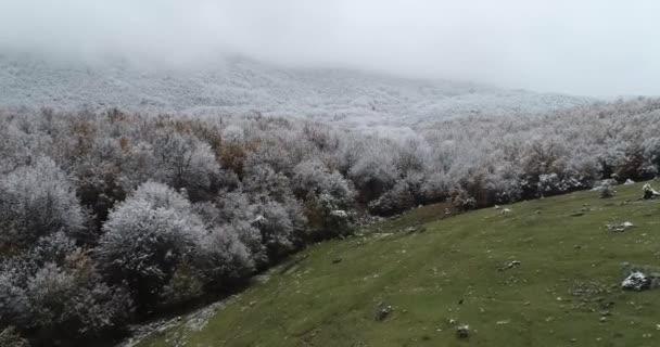 Aerial view of snowy forest in the area of Vermio in northern Greece.  Captured from above with a drone.