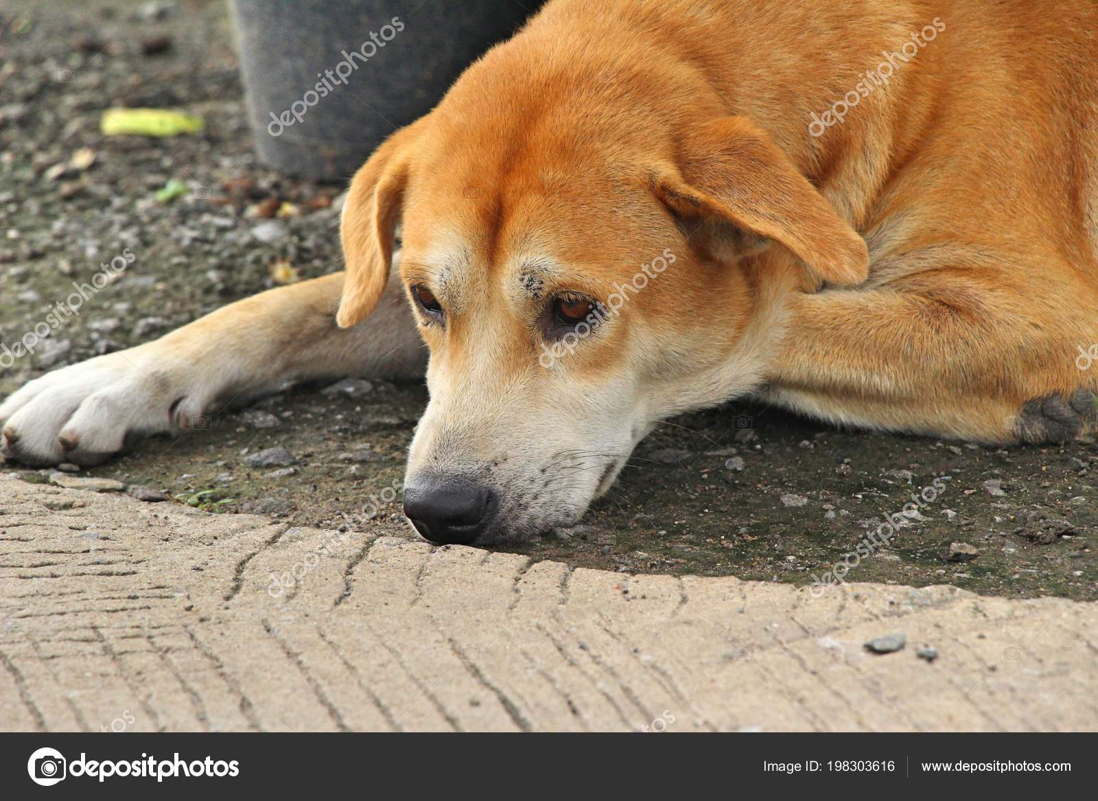 Slapen Op Grond : Bruine hond leuk slapen grond u2014 stockfoto © seagamess #198303616