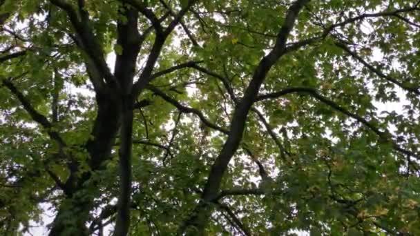 Podzimní stromy a obloha za slunečného dne