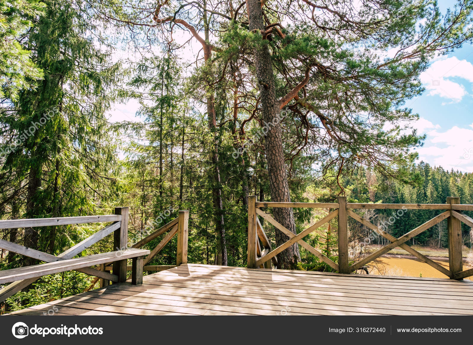 Beautiful Forest Nature Wooden Steps Stock Photo C Aleksmfoto 316272440