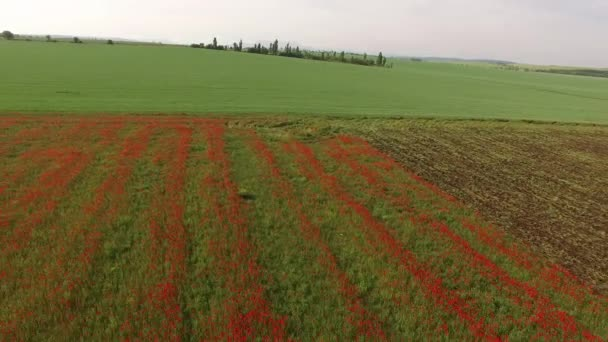 La distanza dal campo verde e la transizione al campo rosso. vista di occhio di uccelli