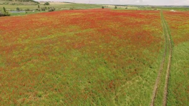 Volando sopra un campo verde rosso. vista di occhio di uccelli