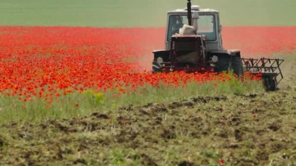 the tractor mows the wild poppy