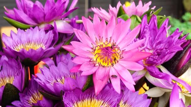 4 k gyönyörű multi színes lotus lilly természet háttér