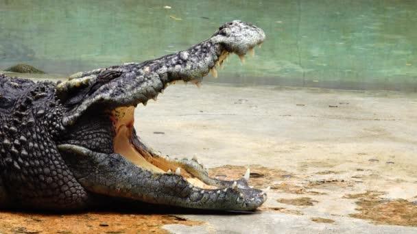 4 k krokodýl savec přírody nebezpečné