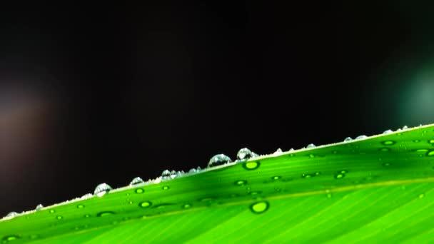 4 kapky deště k na zelených listech