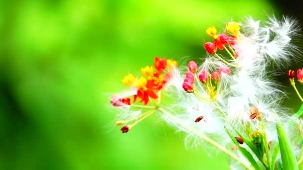4 k szép piros virág a természet zöld háttér Vértes