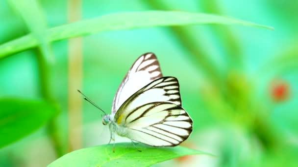 4K Thai gyönyörű pillangó mezei virágok természet szabadban