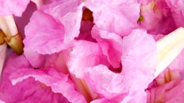 4 k rozostření zaměření růžové trubku strom krásnou přírodou