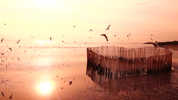 1080p Super Slow Seagulls Fly Beautiful Full Sunset Sunlight Sky Stock Video C Mongpro 234894600