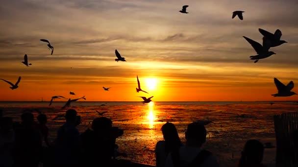 1080p Super Slow Seagulls Fly Beautiful Full Sunset Sunlight Sky Stock Video C Mongpro 234903248
