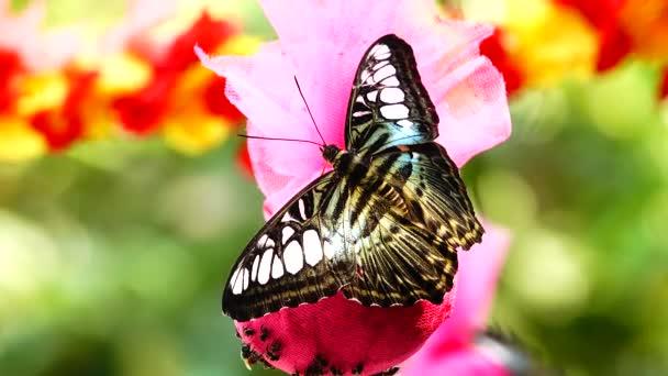4 k thajské Krásný motýl na luční květy přírody outdoorfarm