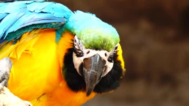 4k színes papagáj fényes tollazata, kék, sárga, zöld és fehér színű. Macaw közeli
