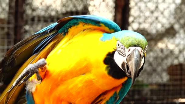 4 k barevný papoušek s křižovala modré, žluté, zelené a bílé barvy. Ara detail