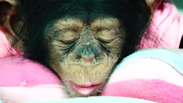 4k portrét dítěte oko dítě šimpanz.