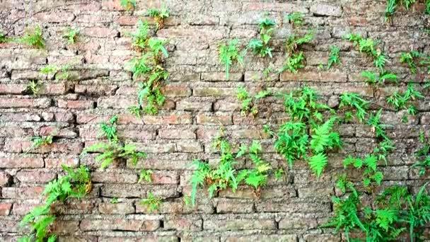 4k sračkante městské zázemí cihly staré více než 150 let nemoderní textura šedivý betonový strom na strukturu textury na okenní stěně