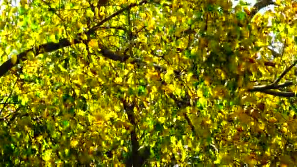 4K Beautiful golden autumn leaves yellow green plant nature backgound