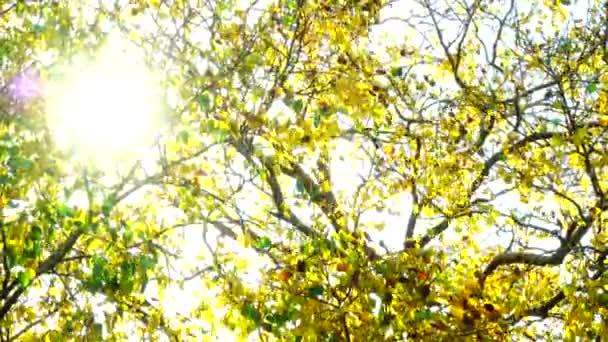 4k Bellissime foglie dorate autunnali giallo verde pianta natura backgound