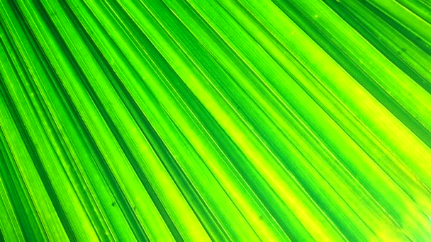 4K green plam leaf texture and backgound