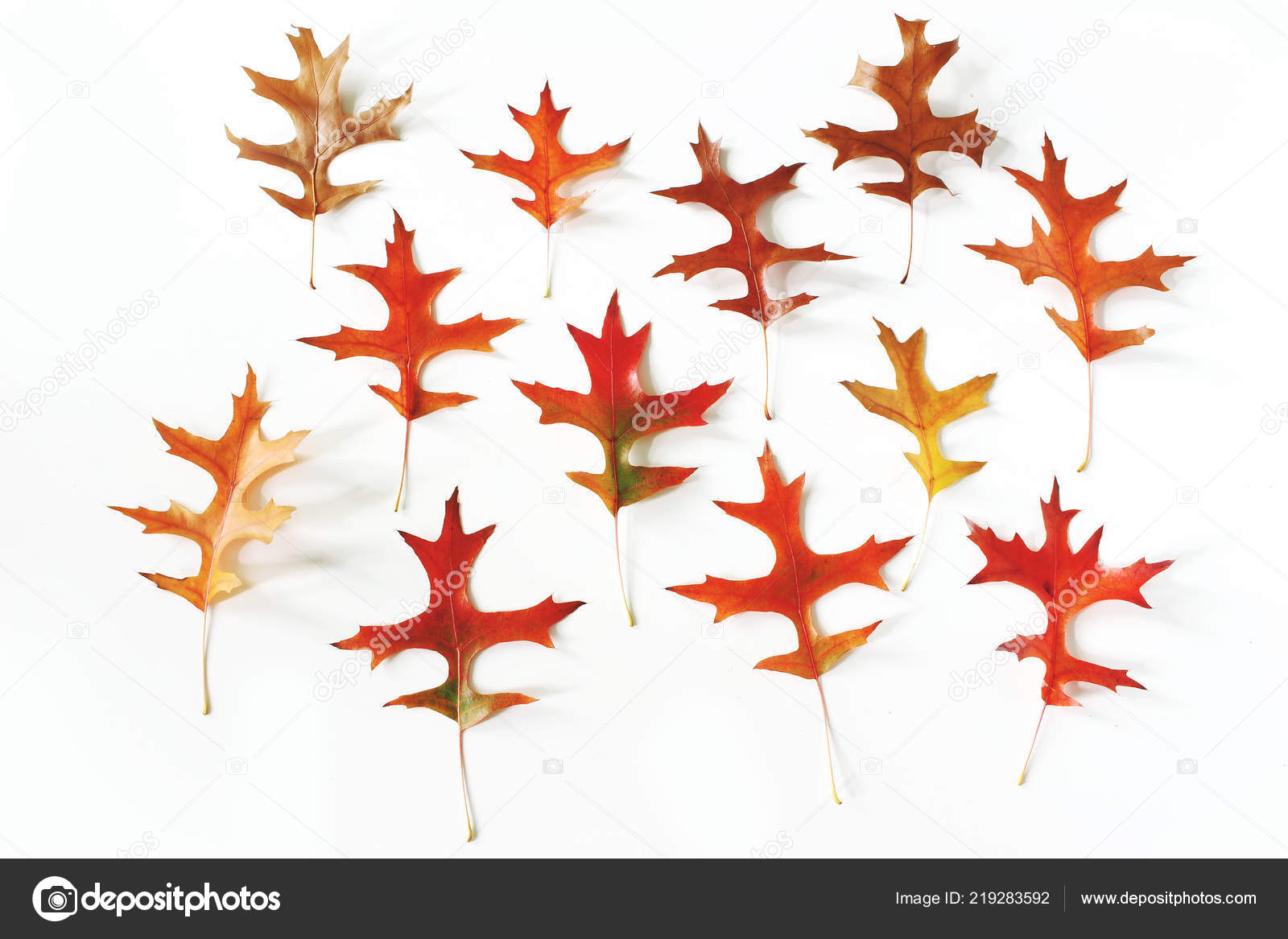 colorful oak leaves pattern on white table background modern autumn