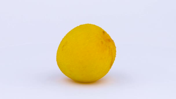 one whole big yellow plum with water drops