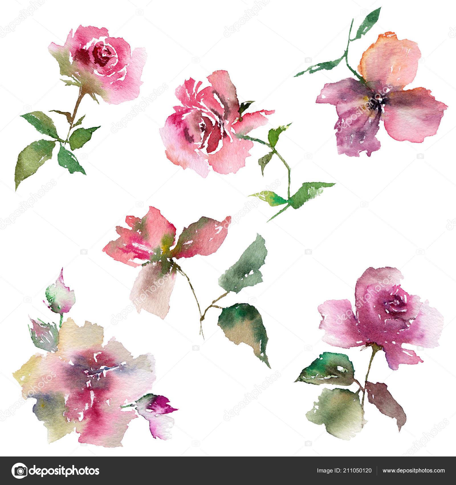 Watercolor Flowers Set Floral Decorative Elements Delicate Drawing