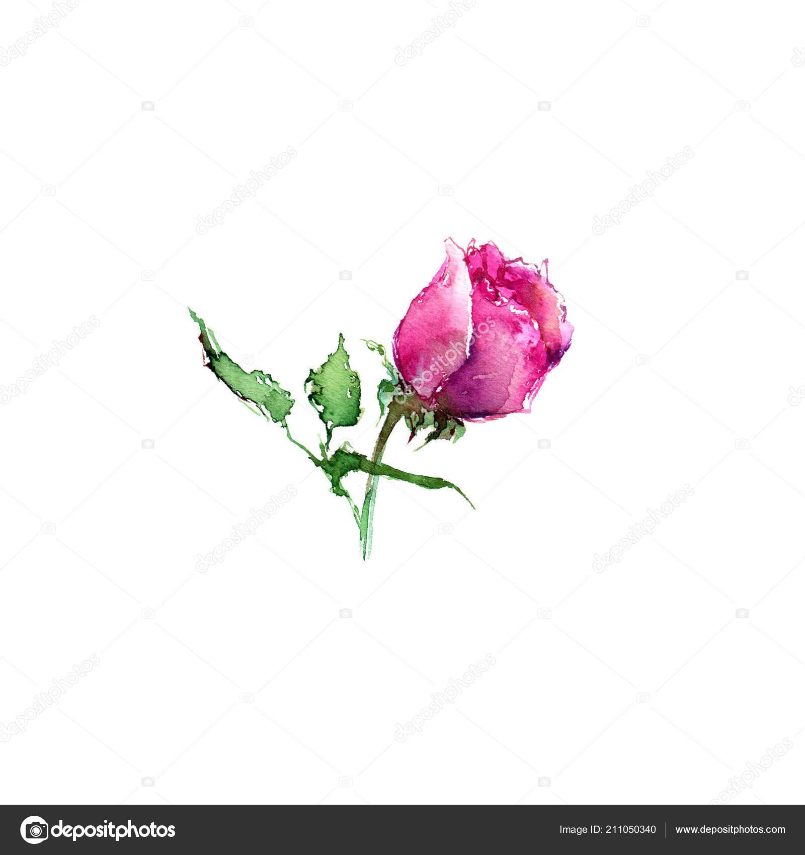Rose Roses Roses Aquarelle Dessin Fleurs Pour Decoration Carte Voeux