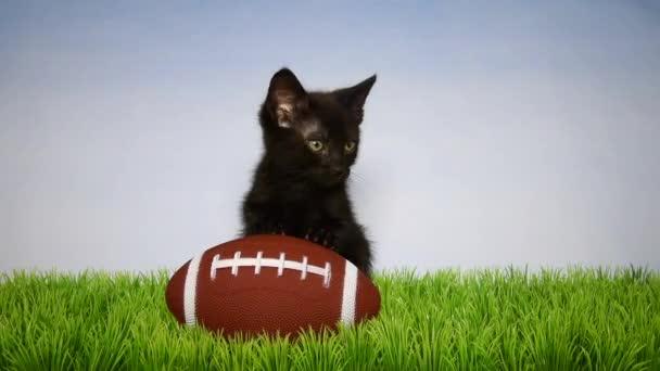 05 _ 27 _ 20 _ HD videó Fekete cica w futball