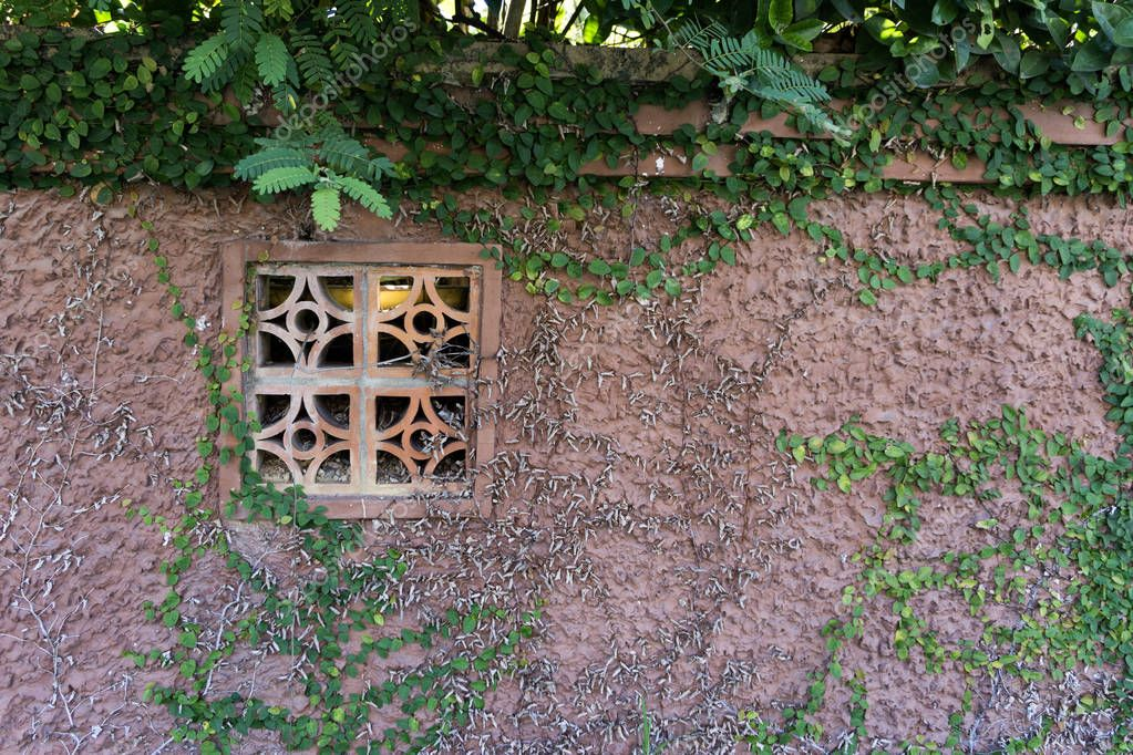 Building with a window and plants