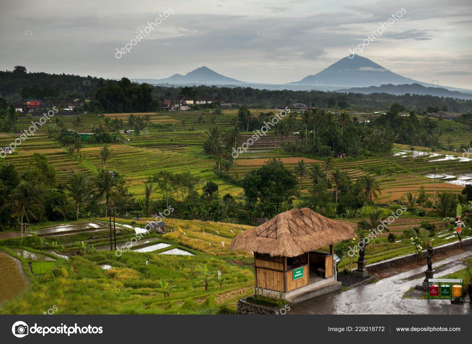 Terrazas Arroz Bali Las Montañas Tiempo Lluvia Arrozales